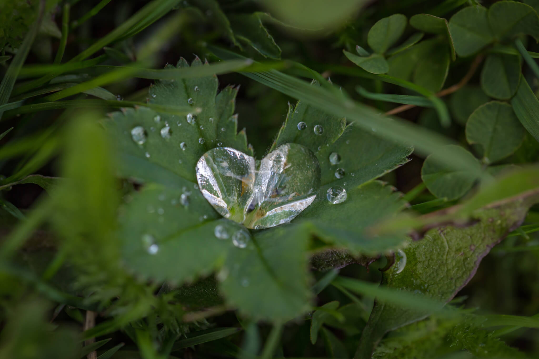 Leaf with heart-shaped dew drop