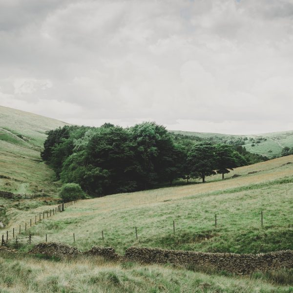 Peak District hills and trees