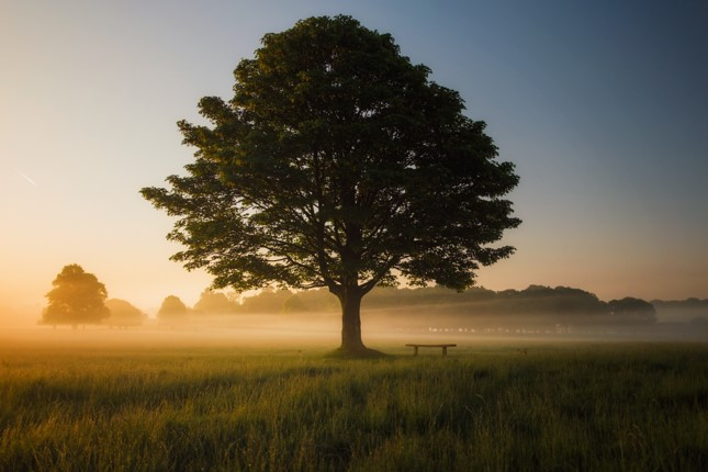 Picture of tree in field