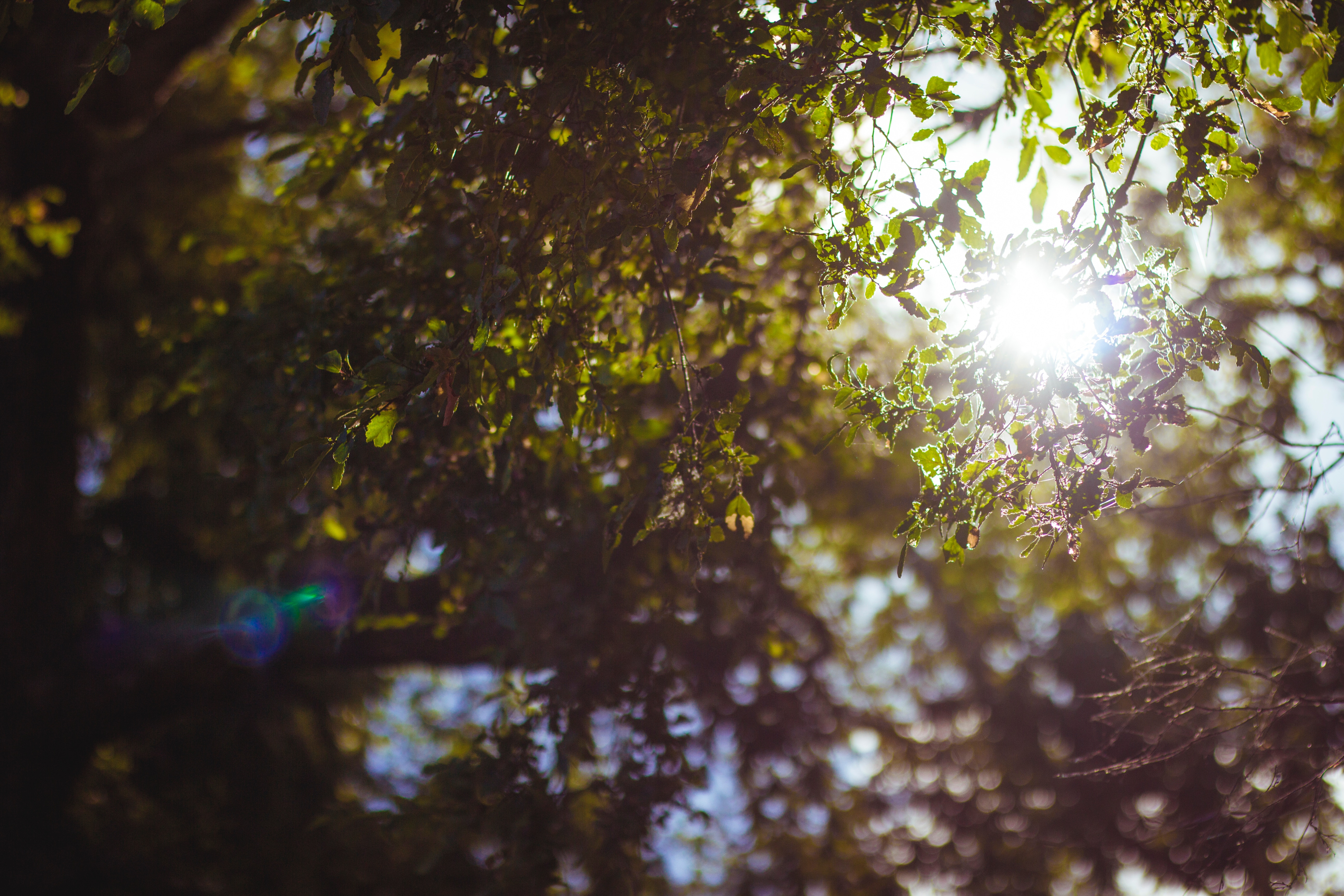 Leaves with sunlight streaming through